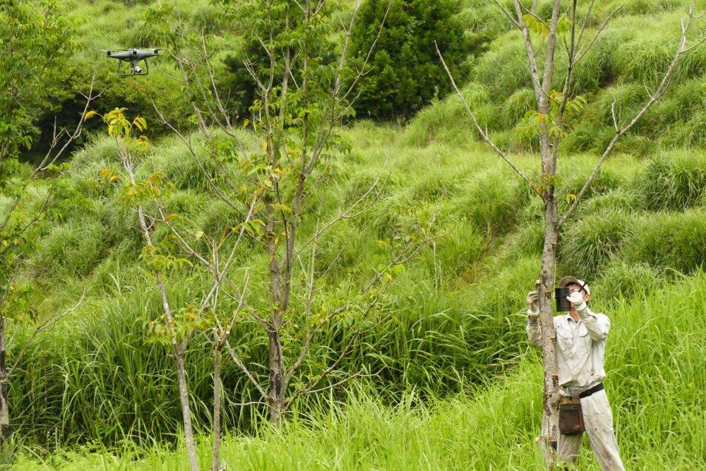 今年は猛暑で漆の木も葉を落としている状態、環境が漆のできに大きく影響します