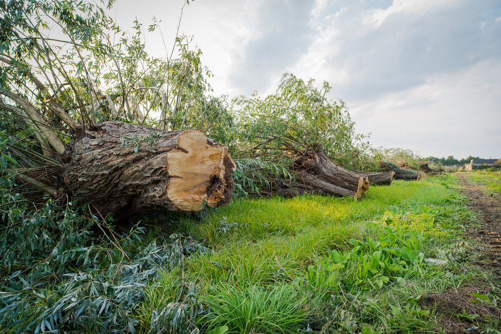 Op basis van de natuuronderzoek werd een groot aantal bomen bij Nudepark 2 omgezaagd terwijl tegen de kapvergunning nog een beroepszaak liep.