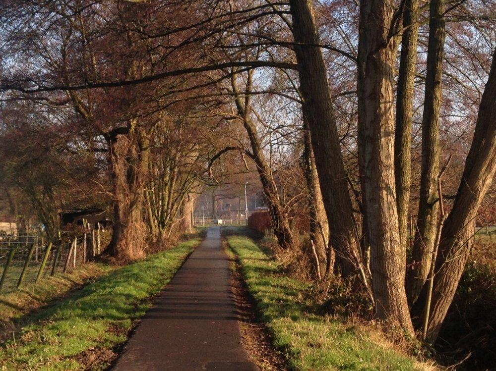 Richting de Wildekamp, waar vroeger de Peppelderbrink lag, is het beeld met oude elzen nog intact. (foto Patrick Jansen)