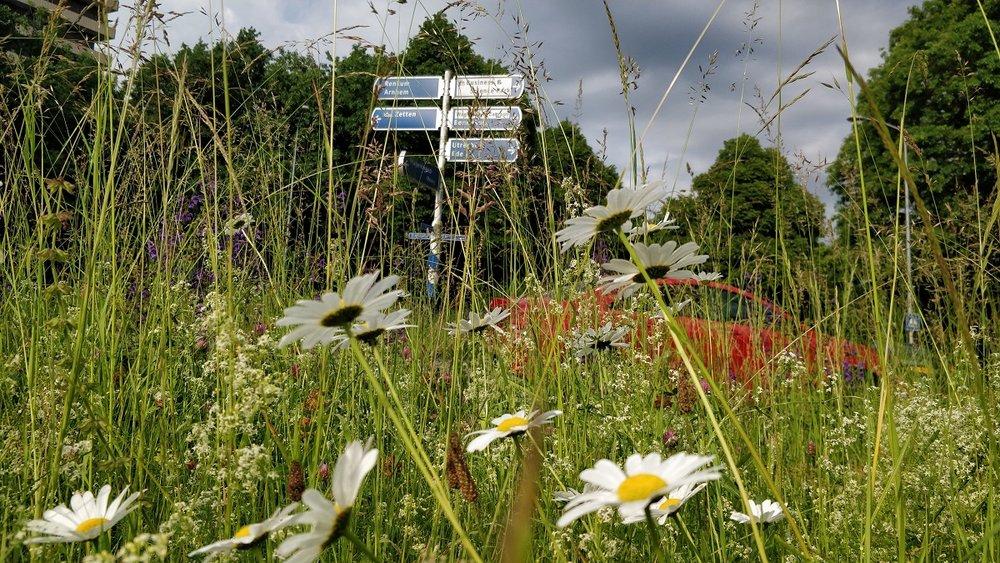 Onder meer bloemrijke bermen helpen de biodiversiteit in de stad te verhogen.