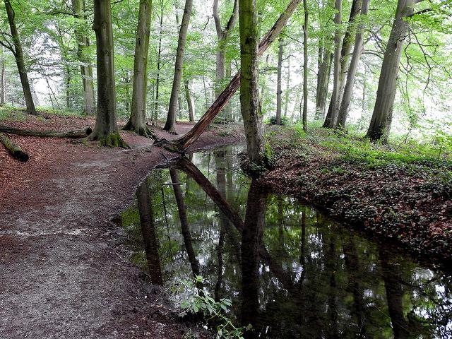 Renkumse beek. Foto: Gertjan van Noord (CC BY-ND 2.0)