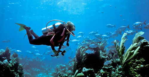 Female scuba diver and Bermuda Chub
