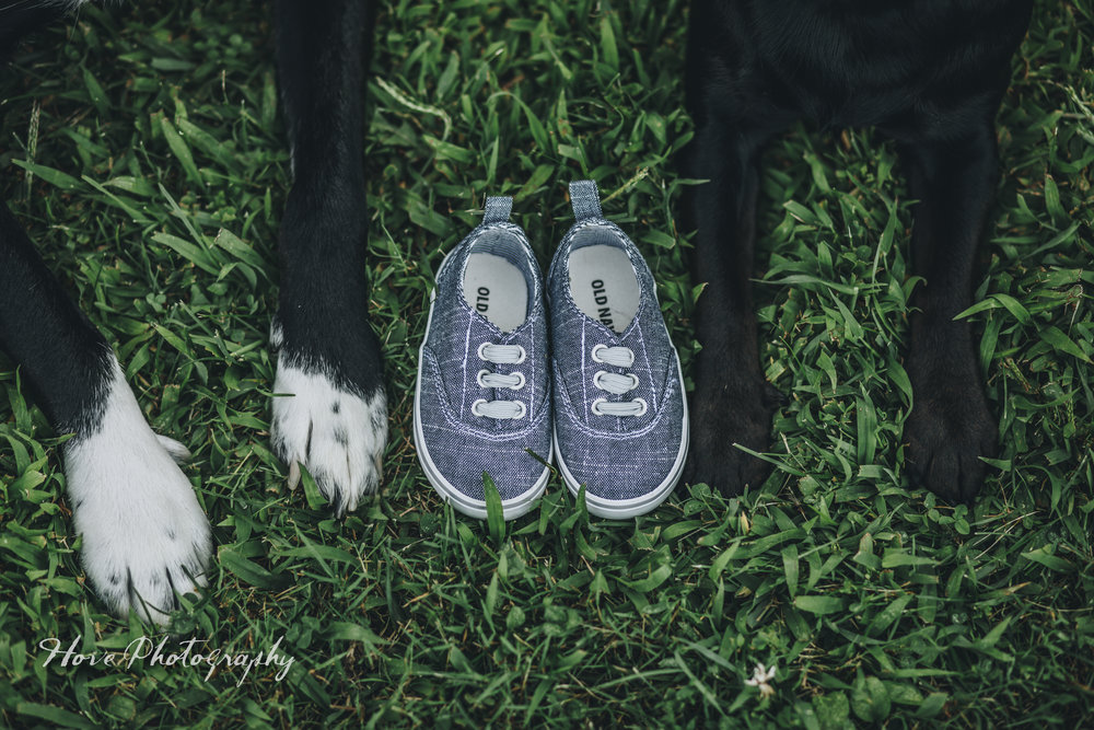Green Isle Park Maternity Session