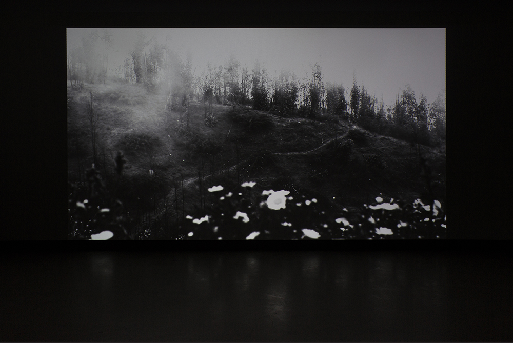 © Gabriela Golder,  Tierra Quemada (2015). Exhibition view. Photo: Marilou Crispin.