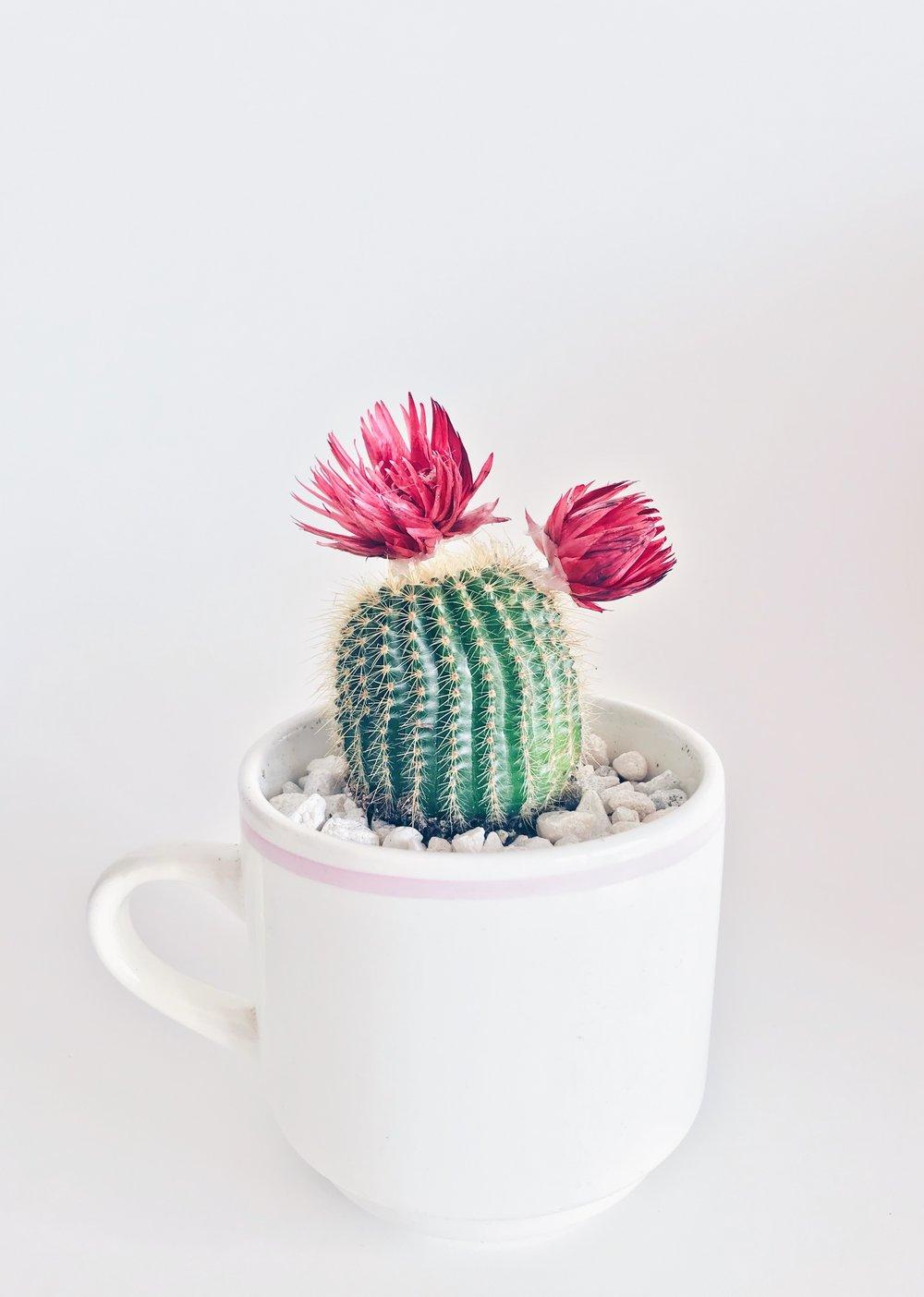 When you love man whos cactus