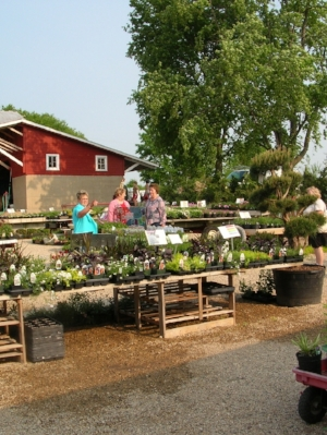 Schönheit Gardens Nursery Photo Gallery