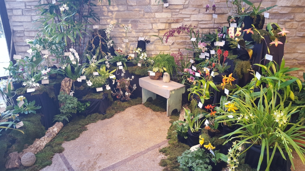 Madison Orchid Growers' Guild's annual orchid show