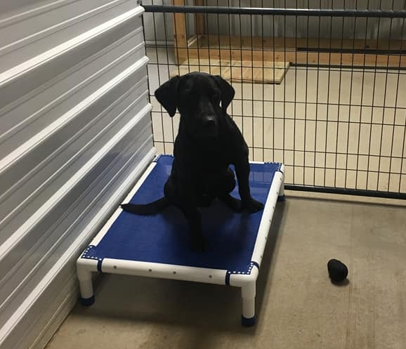 Armored Macomo Kennel Bed - Standard Size