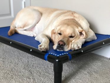 sleeping dog on elite.jpg