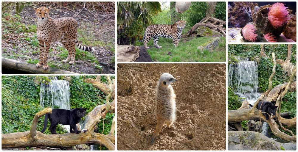 The Chester Zoo is one of the best zoos we've seen!