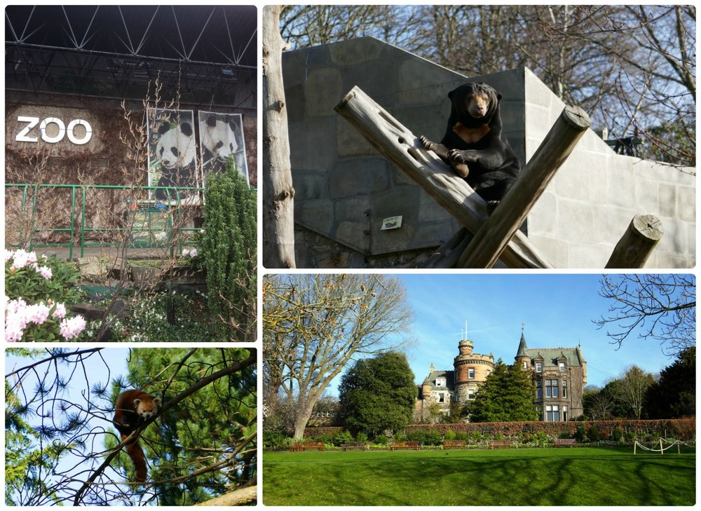 Edinburgh Zoo, Clockwise: Front of zoo, bear exhibit, Red Panda, castle building in the zoo.