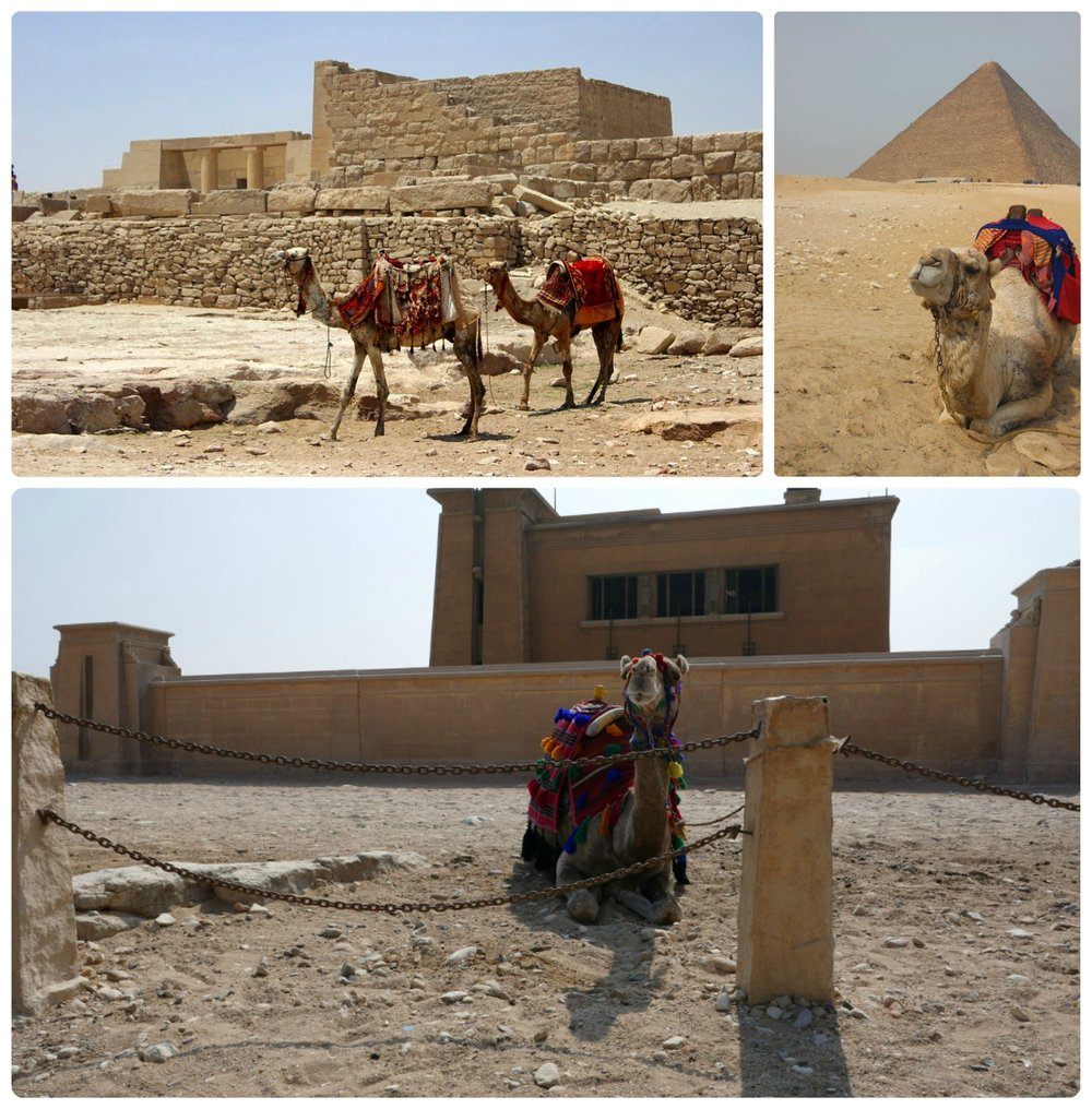 Camel rides have become synonymous with the Giza Pyramids.