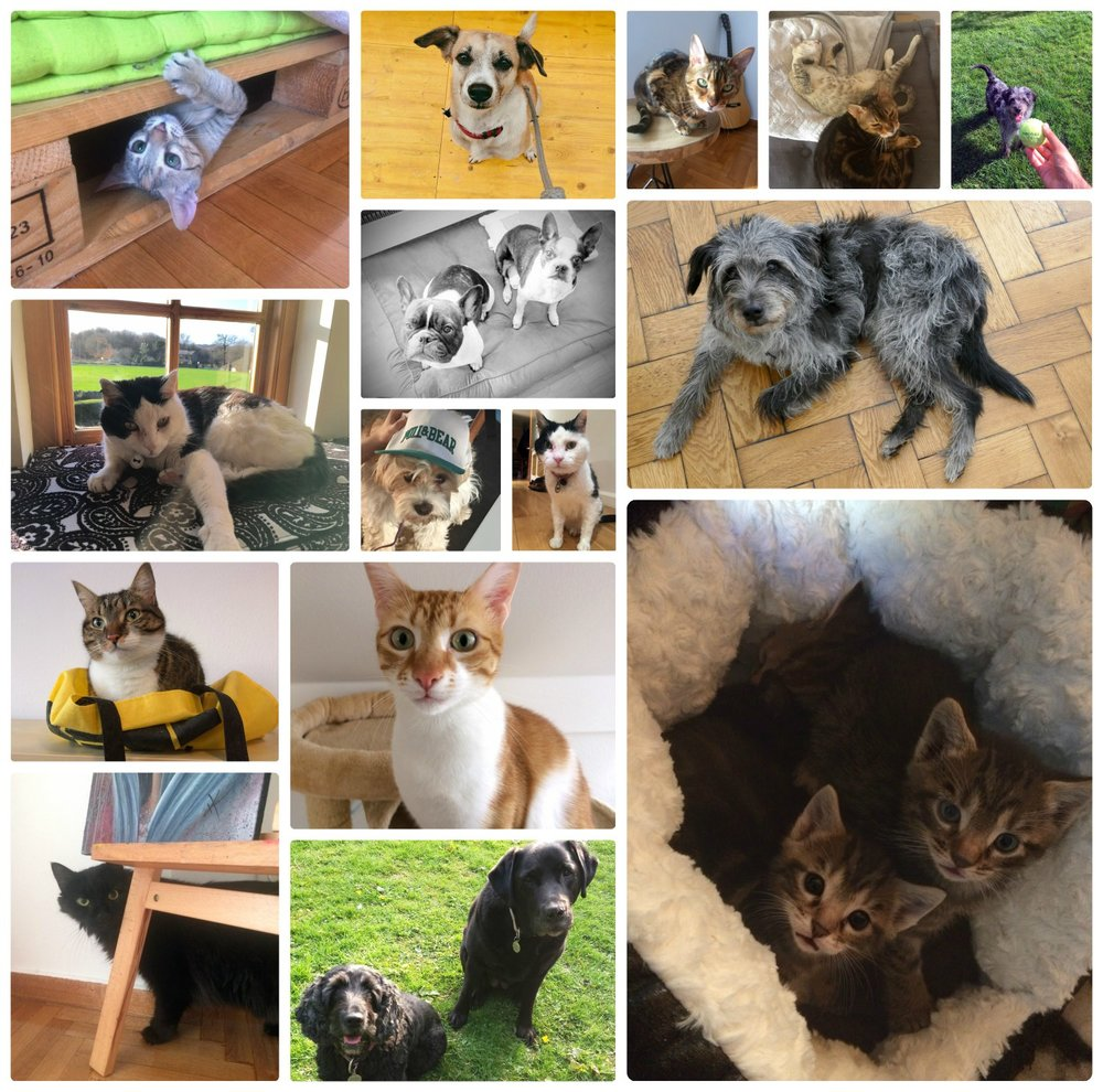 We've cared for some great pets while  house sitting and made amazing memories!