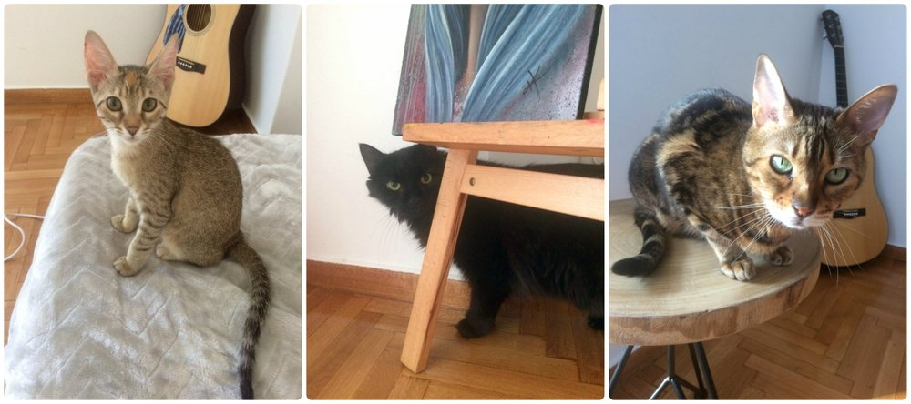 Left to right: Lilo, Roland (camera shy!), Vesper. Wait, didn't we just mention only two cats? Read on for the explanation...