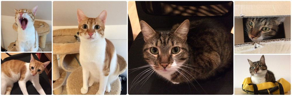 We meet so many great pets while house sitting! On the left is Rufo (still a kitten) and on the right is Ronya.