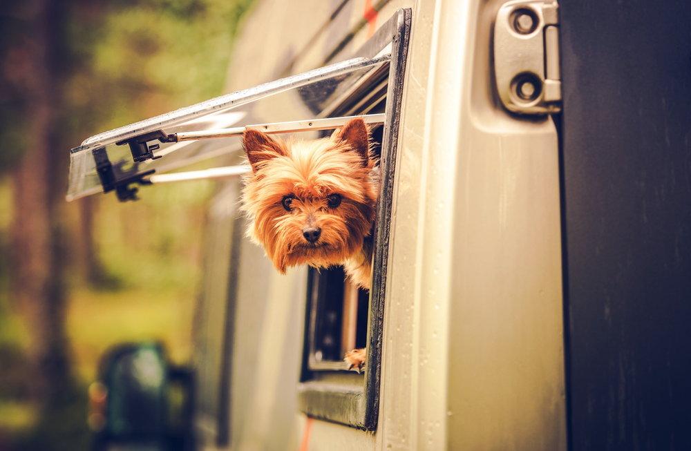 screw_the_average_rv_camping_new_zealand_camping_dog_window.jpg