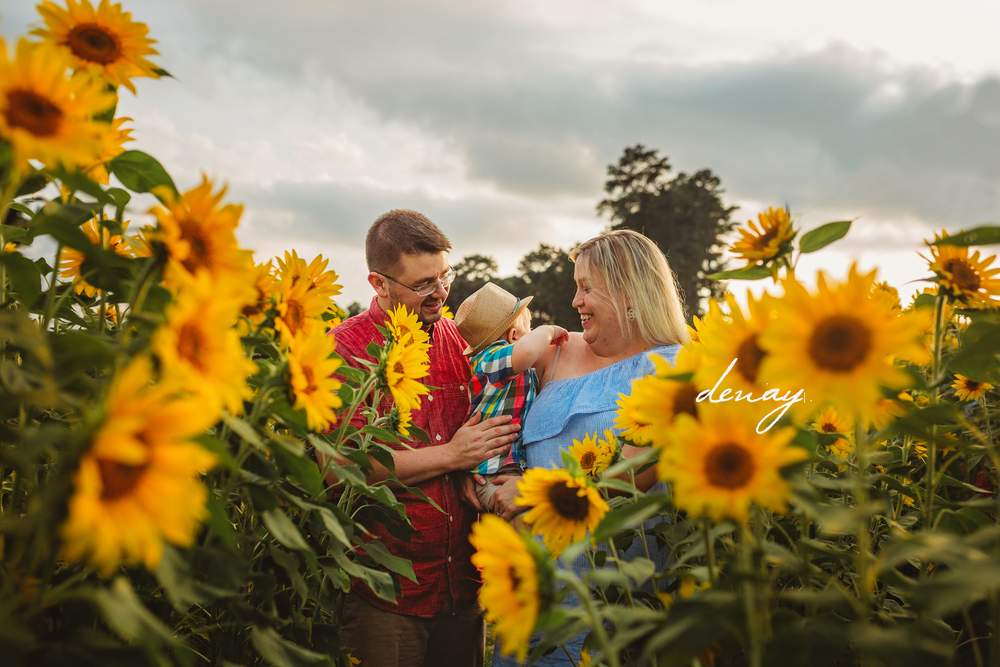The Andersons Sunflower farm