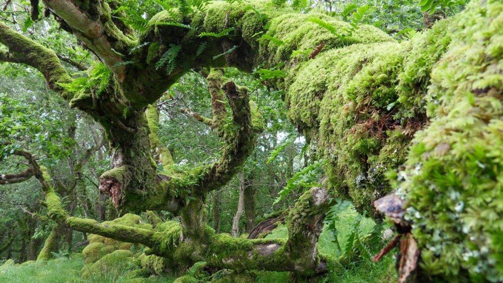 Ashford-Forest-2-1024x576.jpg
