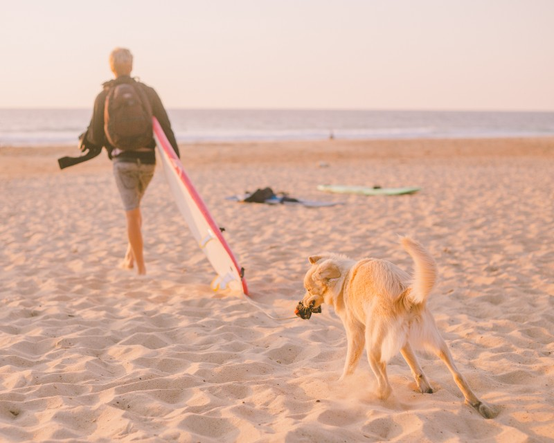 dog biting surfboard leash