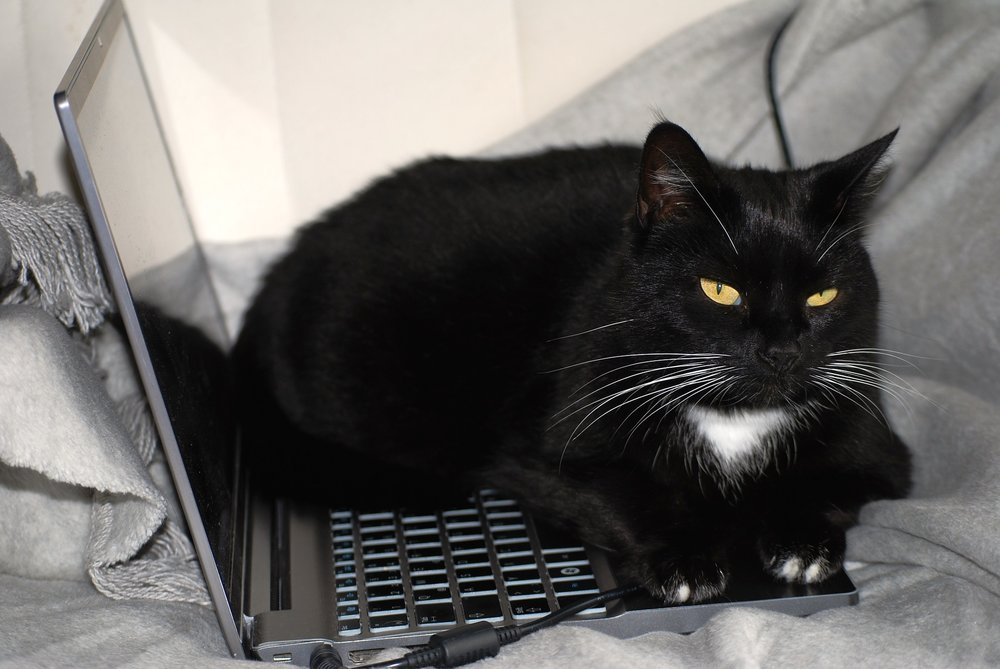 black cat lying on laptop computer