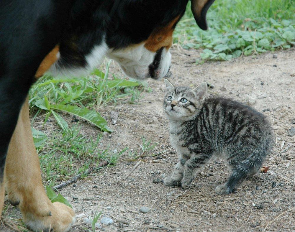 ...dislike your dog -