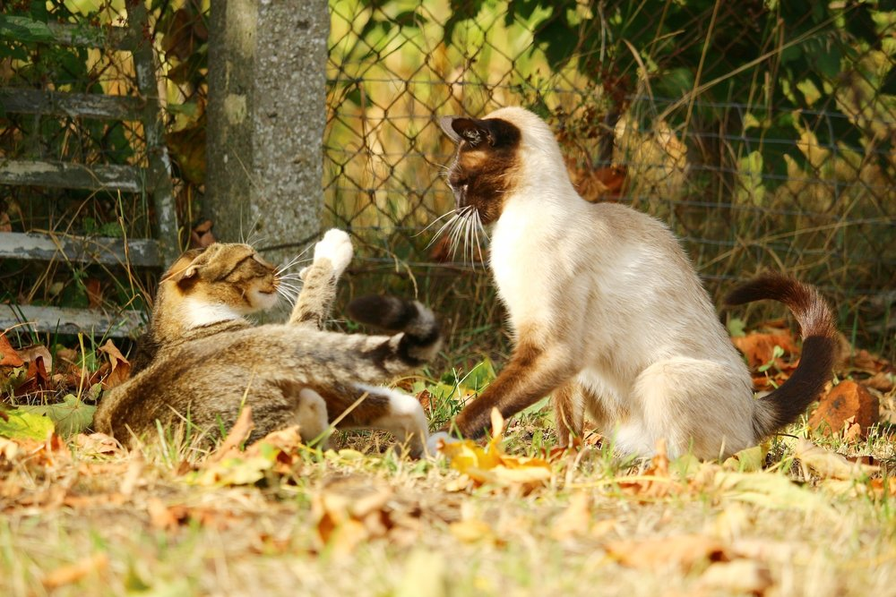 ...don't get along with your other cat(s) -