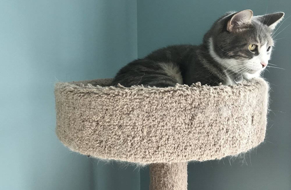 Environmental management - (making improvements to a cat's space to influence behavior)