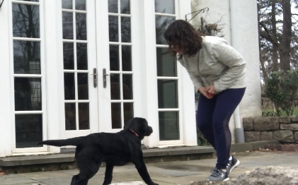 Training Sessions (3x/week) - Naomi works with your puppy or adult dog 1-on-1 in your home or in your neighborhood. You can be at home or away during the session time - you'll get an emailed video/written summary of what your dog worked on that day.