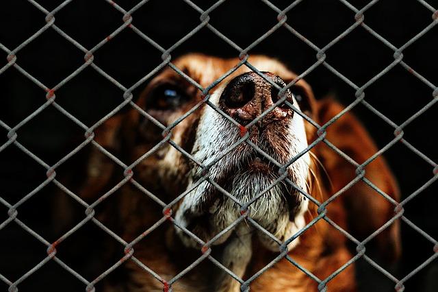 Shelter dog, rescue dog before adoption