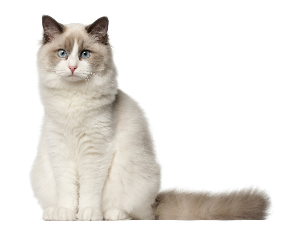Step 1.Talk to Naomi about your cat or kitten - Naomi will ask you some questions to get a sense of your training goals, your cat's personality, and whether we would be a good fit to work together!