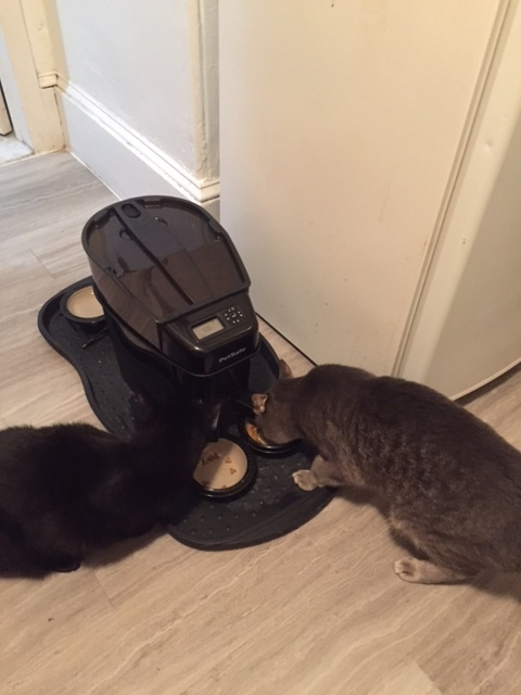 jack and pepper eating auto feeder.JPG
