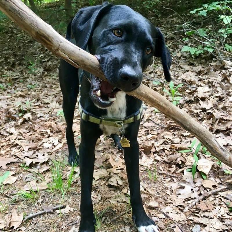 sam with stick.jpg