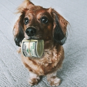 dog holding roll of money in mouth, Photo from  https://www.tradingacademy.com/