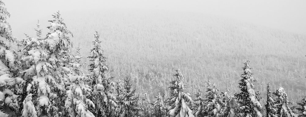 snow-forest2.jpg