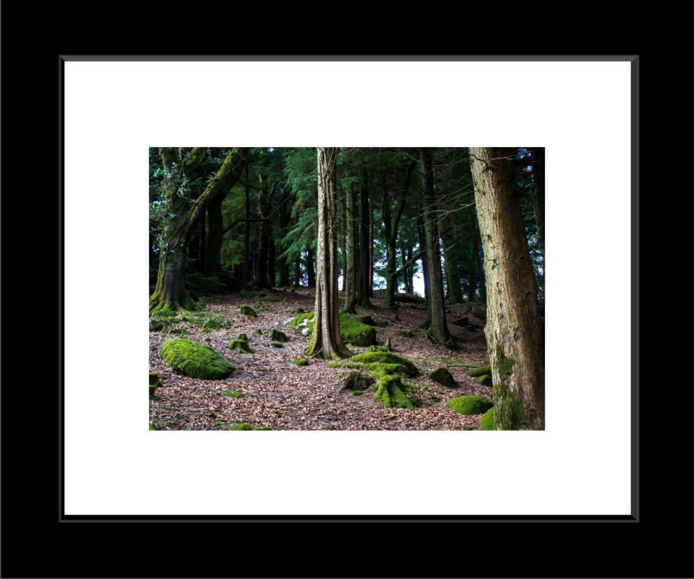 Framed Print - white mat