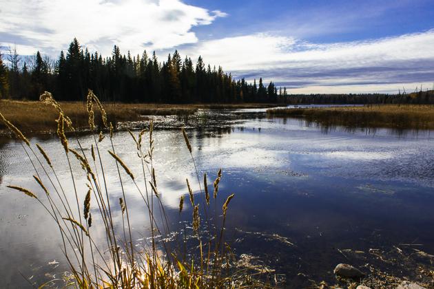 Elk_Trail-3.jpg