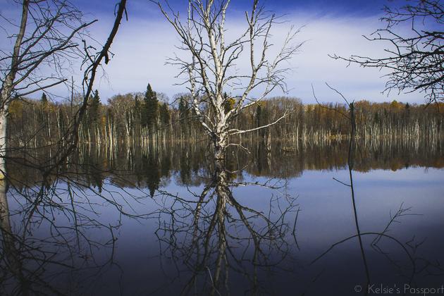 Elk_Trail-13.jpg