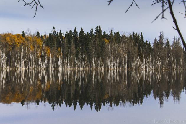 Elk_Trail-15.jpg