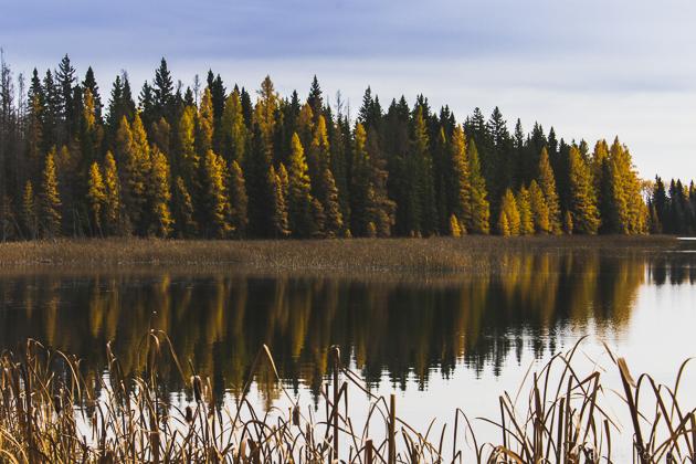 Elk_Trail-17.jpg