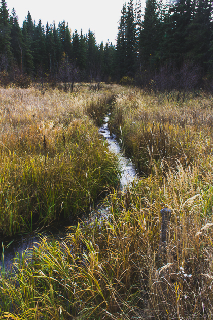 Elk_Trail-25.jpg