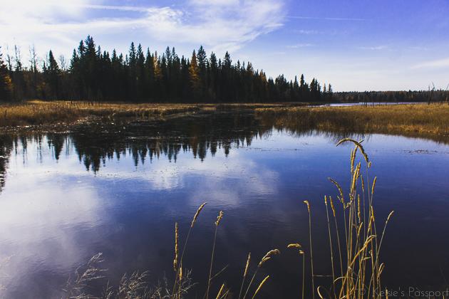Elk_Trail-27.jpg