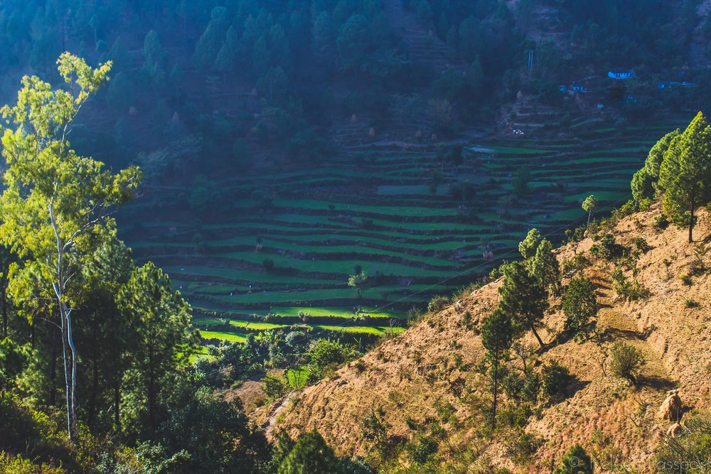 India_Himalayas-14.jpg