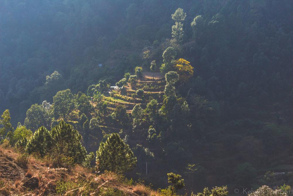 India_Himalayas-15.jpg