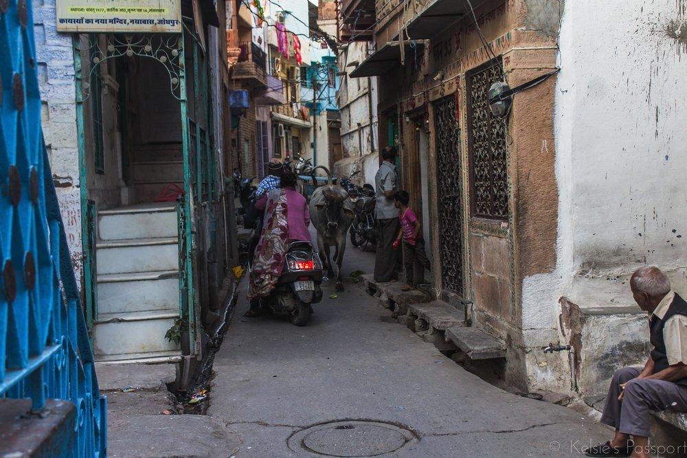 India_Jodhpur-14.jpg