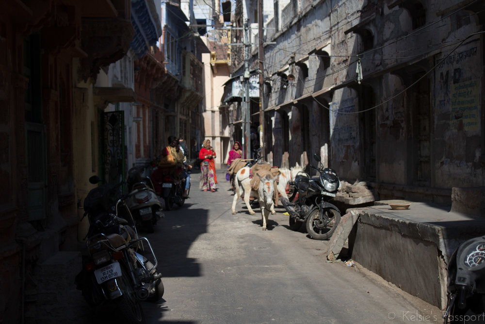 India_Jodhpur-21.jpg