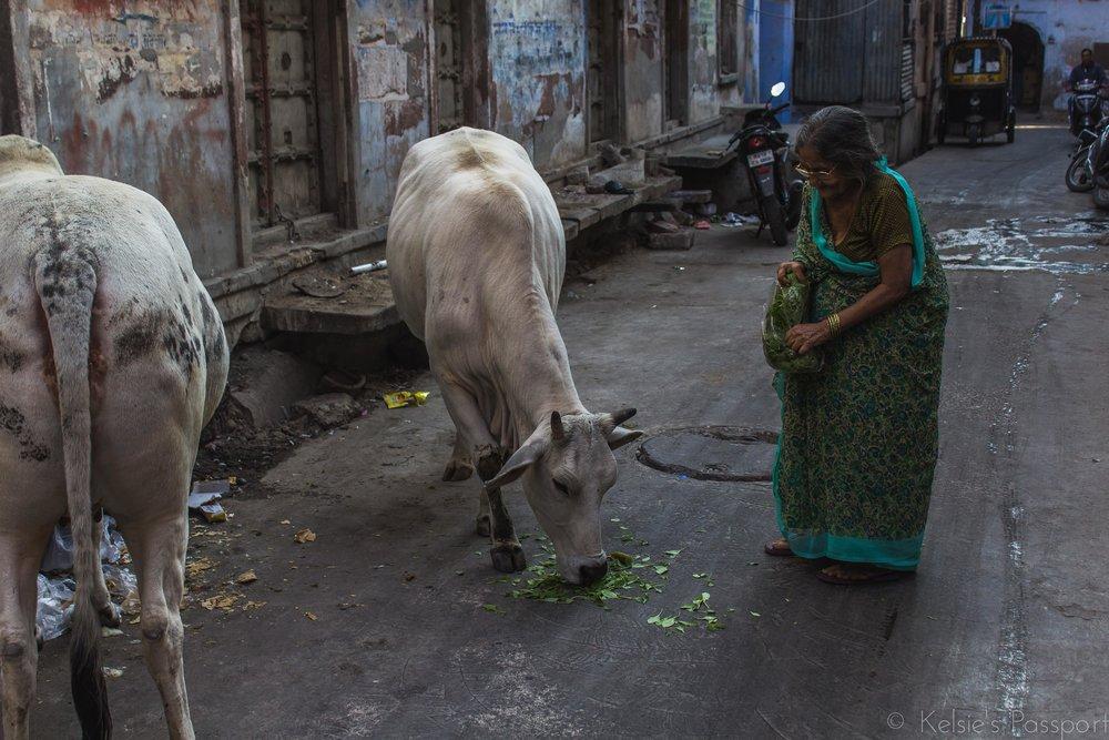 India_Jodhpur-26.jpg