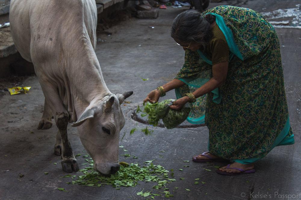 India_Jodhpur-27.jpg