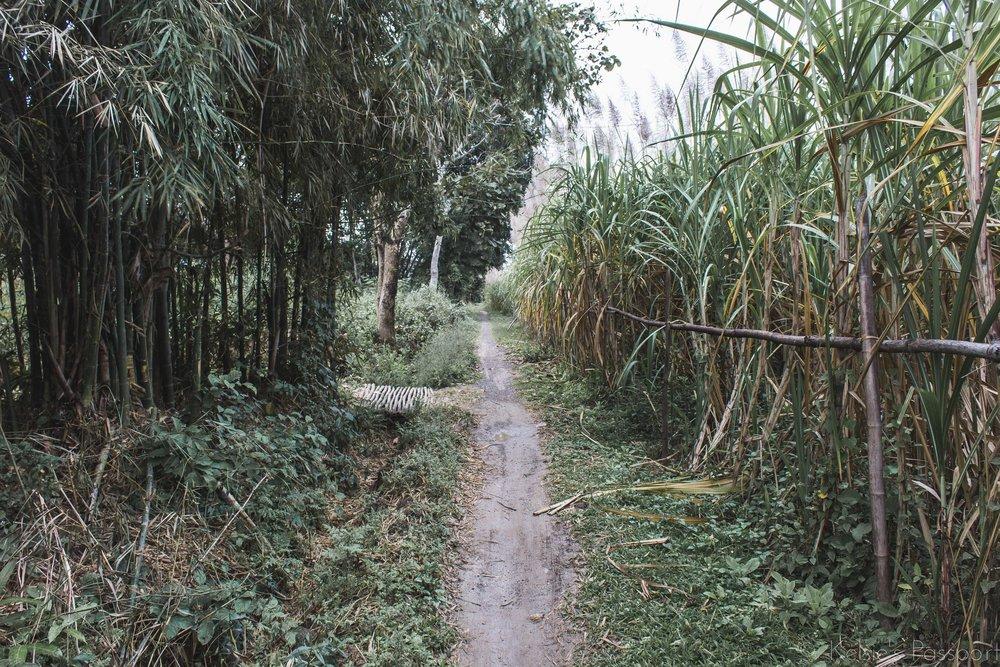 KP_Myanmar-60.jpg