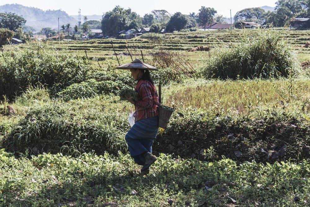 KP_Myanmar-67.jpg