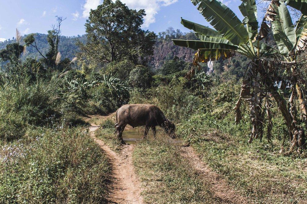 KP_Myanmar-71.jpg
